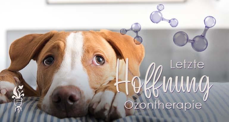 Ozontherapie - Wenn nichts mehr geht