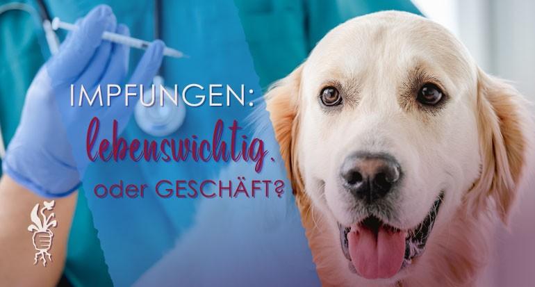 Impfungen beim Hund – 9 Fakten zu Impfungen