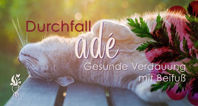 Katze mit Artemisia gegen Durchfall erfolgreich unterstützt