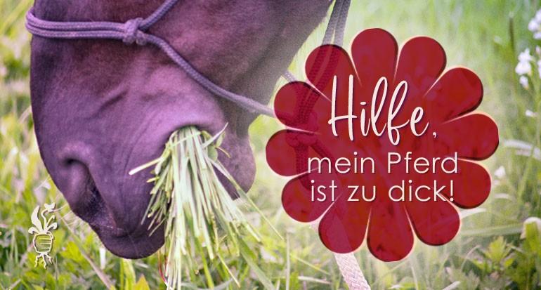 Gewichtsprobleme bei Pferden